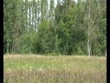 30.06.2012, ЖК Новый Петергоф,1 корпус 3 секция под звуки проезжающего за деревьями поезда